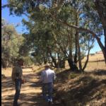 Surveying underway at Coppabella Wind Farm site entrance